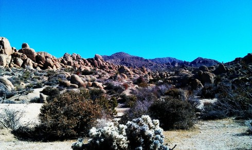 The Joshua Tree national park sits just north of Palm Springs