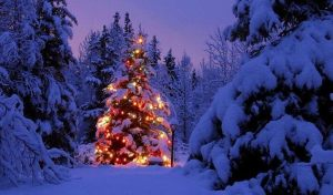 christmas-tree-snow-1