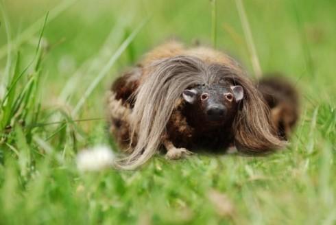Haggis-creature
